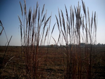 Field vegetation    photo