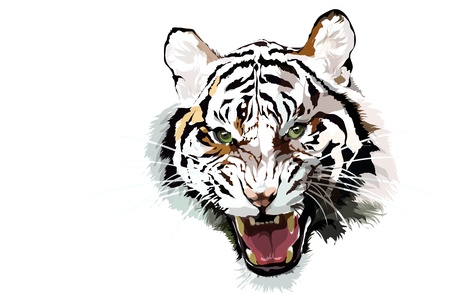 Close up of a beautiful Siberian Tiger  Stock Vector - 18931107