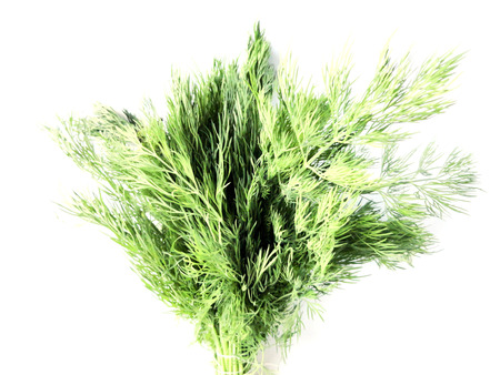 Photo of dill in a beam on a white background. Used in cooking. Edible species of plants.