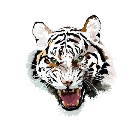 Vector image of a tiger on a monophonic background.