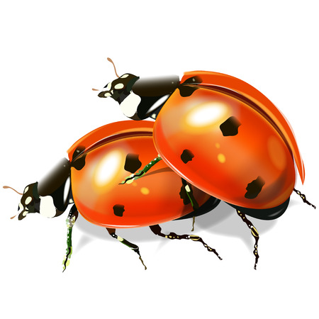 Insect ladybird. Red shade beetle. Vector image on white background. Illustration