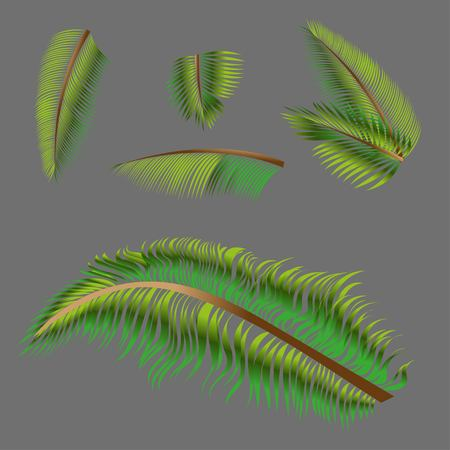 Vector drawings of a palm tree. On a gray background.