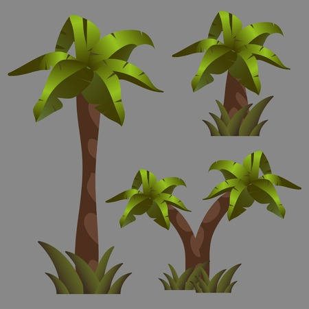 Vector drawings of a palm tree. On a white background.