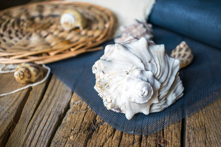 Photo of sea shells. On a wooden table with a cloth. Stock Photo