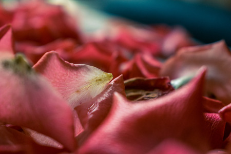 A photo of a rose petal. Decor of roses, background of rose petals.