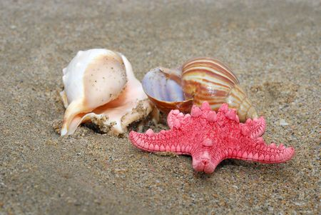 Seashell and star photo