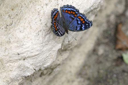 Butterfly on a rock Stock Photo