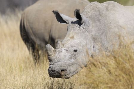 place of interest: Rhino