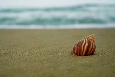 Lonely seashell Stock Photo