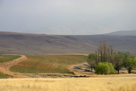 Plowed fields, Clarens, South Africa