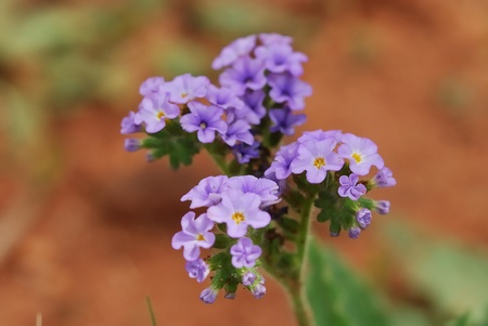 Purple flower Stock Photo - 9517858
