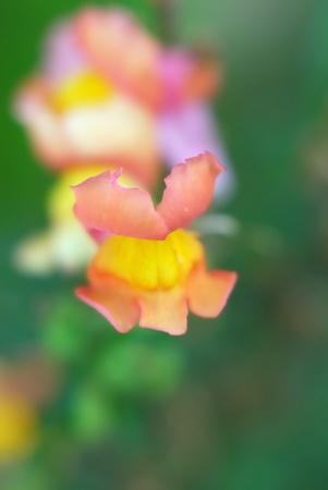 phytology: Flower