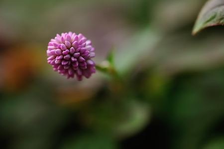 small purple flower: A small purple flower