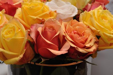 rosas naranjas: Las rosas amarillas y naranjas Foto de archivo