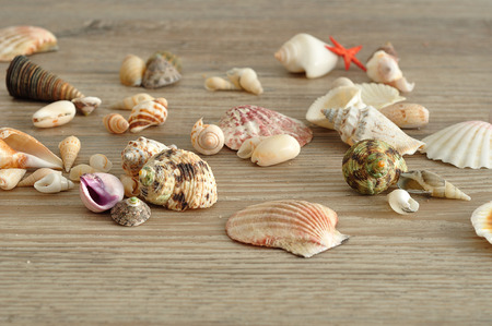 A collection of seashells on a wooden background Stock Photo