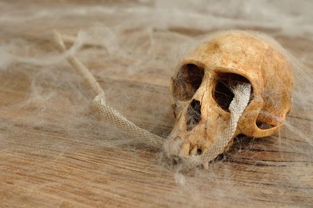Vervet monkey skull with a snake skin covered in cobwebs
