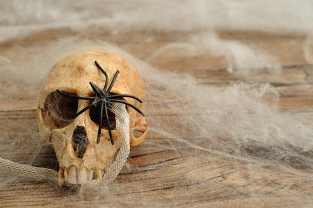 Vervet monkey skull with a snake skin covered in cobwebs and a black spider