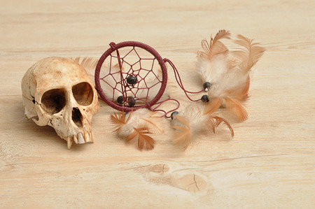 Vervet monkey skull displayed with a dream catcher