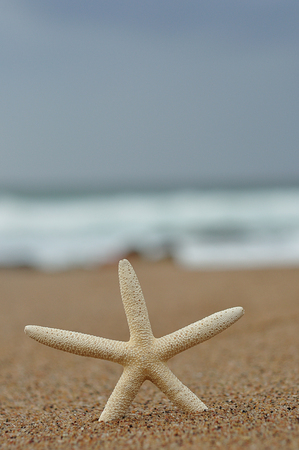 A white starfish on the beach with the ocean out of focus in the background