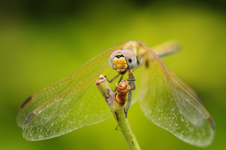 Close up of a dragon fly on a twig in a garden