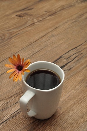 An orange daisy with a white mug Banque d'images