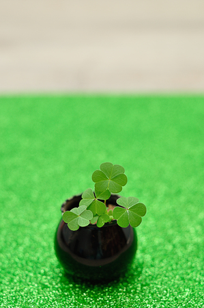 Clovers planted in a small black pot