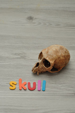 The word skull with a monkey skull