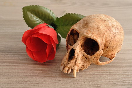 A monkey skull displayed with a red artificial rose