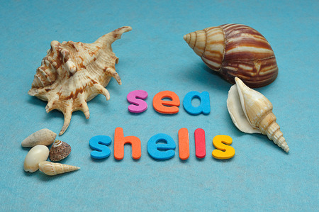 A variety of seashells displayed with the words sea shells