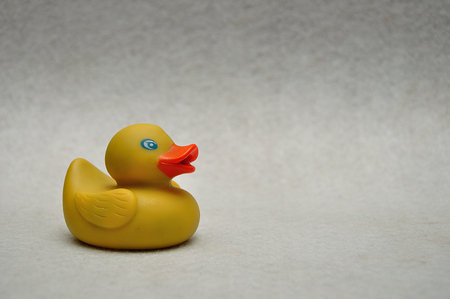 A rubber duck on a white background