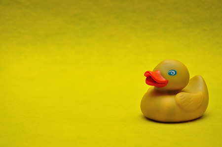 A rubber duck on a yellow background