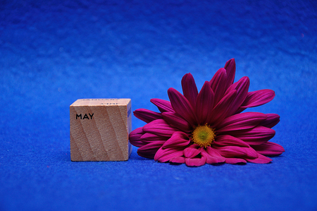 May on a wooden block with a purple daisy on a blue background
