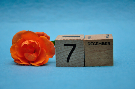 7 December on wooden blocks with an orange rose on a blue background