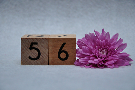 Number fifty six with a pink aster on a white background