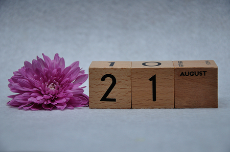 21 August on wooden blocks with a pink daisy on a white background