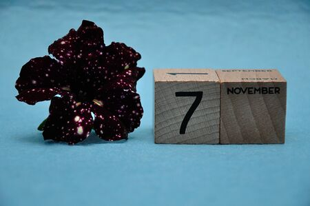 7 November on wooden blocks with a purple petunia on a blue background 免版税图像