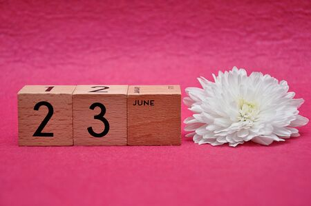23 June on wooden blocks with a white aster on a pink background 写真素材
