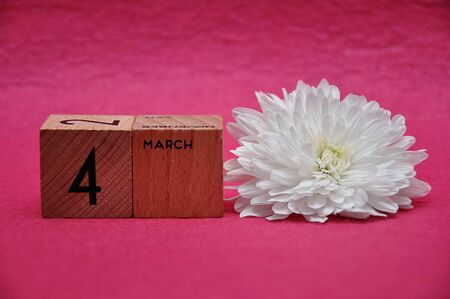 4 March on wooden blocks with a white aster on a pink background 写真素材