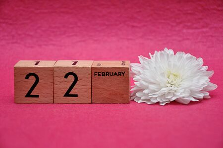 22 February on wooden blocks with a white aster on a pink background 写真素材