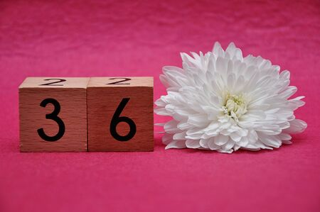 Number thirty six with a white aster on a pink background