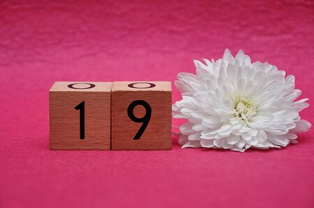 Number nineteen with a white aster on a pink background 写真素材