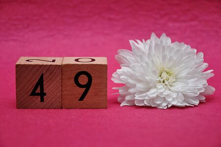 Number forty nine with a white aster on a pink background 写真素材