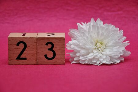 Number twenty three with a white aster on a pink background
