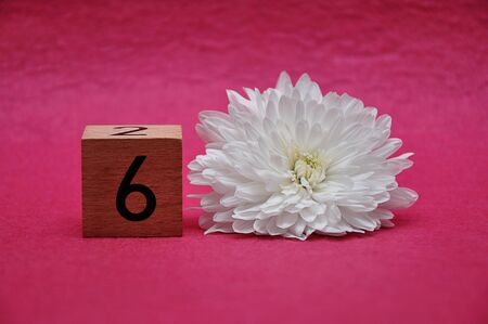 Number six with a white aster on a pink background
