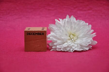 December on a wooden block with a white aster on a pink background