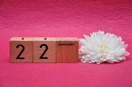 22 January on wooden blocks with a white aster on a pink background 写真素材