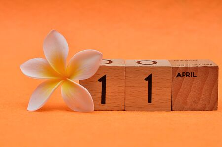 11 April on wooden blocks with a Frangipani flower on an orange background Stock Photo