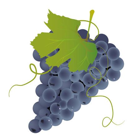Tros druiven Stock Illustratie