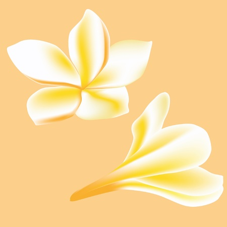 Frangipani. Flower for spa Vector