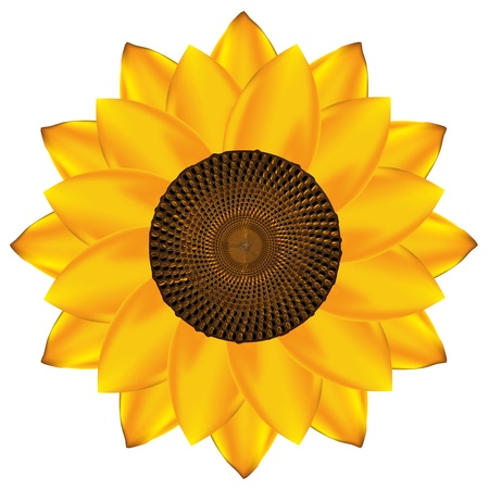Abstract vector sunflower background. EPS10  Illustration